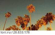 Купить «palm trees over sun shining in sky», видеоролик № 28833178, снято 8 июля 2018 г. (c) Syda Productions / Фотобанк Лори