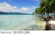Купить «tropical beach in french polynesia», видеоролик № 28833286, снято 1 июля 2018 г. (c) Syda Productions / Фотобанк Лори