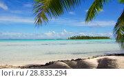 Купить «tropical beach with palm tree in french polynesia», видеоролик № 28833294, снято 1 июля 2018 г. (c) Syda Productions / Фотобанк Лори