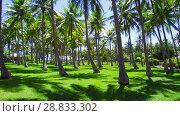 Купить «palm trees on tropical island in french polynesia», видеоролик № 28833302, снято 1 июля 2018 г. (c) Syda Productions / Фотобанк Лори