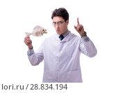 Купить «Funny crazy professor paleontologyst studying animal skeletons i», фото № 28834194, снято 27 февраля 2018 г. (c) Elnur / Фотобанк Лори