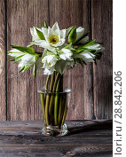 Купить «Bouquet of white water lilies in a glass vase on a wooden background», фото № 28842206, снято 28 июля 2018 г. (c) Наталья Волкова / Фотобанк Лори