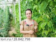Купить «Woman gardener standing near pea and soy seedlings in hothouse», фото № 28842798, снято 16 августа 2018 г. (c) Яков Филимонов / Фотобанк Лори