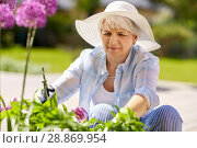 Купить «senior woman with garden pruner and allium flowers», фото № 28869954, снято 3 июня 2018 г. (c) Syda Productions / Фотобанк Лори