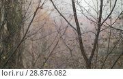 Купить «Dull autumn scene of bare trees and snow with rain», видеоролик № 28876082, снято 21 августа 2018 г. (c) Данил Руденко / Фотобанк Лори