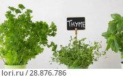 Купить «herbs or spices with name plates in pots on table», видеоролик № 28876786, снято 17 июля 2018 г. (c) Syda Productions / Фотобанк Лори