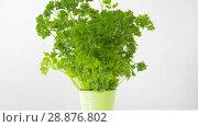 Купить «green parsley herb in pot on table», видеоролик № 28876802, снято 17 июля 2018 г. (c) Syda Productions / Фотобанк Лори