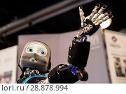 Купить «'Nikita' the robots name is an I Cub that is able to track objects and react, on show from Edinburgh centre of Robotics at Heririot Watt University at...», фото № 28878994, снято 22 марта 2017 г. (c) age Fotostock / Фотобанк Лори