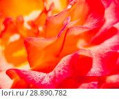 Купить «Abstract background of rose petals», фото № 28890782, снято 1 августа 2018 г. (c) Антон Гвоздиков / Фотобанк Лори