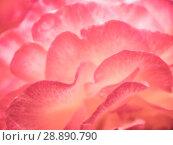 Купить «Abstract background of rose petals», фото № 28890790, снято 1 августа 2018 г. (c) Антон Гвоздиков / Фотобанк Лори
