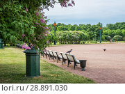 Купить «Санкт-Петербург. Вороны на Марсовом поле. A crow on a bench on the Marsovo Field», фото № 28891030, снято 4 июня 2018 г. (c) Baturina Yuliya / Фотобанк Лори