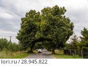 Купить «Poland, Pomeranian - tree lined avenue», фото № 28945822, снято 27 августа 2015 г. (c) Caro Photoagency / Фотобанк Лори
