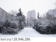 Купить «Berlin, Germany, monument protected housing estate Ernst-Thaelmann-Park in Berlin-Prenzlauer Berg», фото № 28946286, снято 6 января 2016 г. (c) Caro Photoagency / Фотобанк Лори