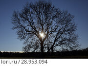 Купить «New Kaetwin, Germany, sun shines through a leafless tree in winter», фото № 28953094, снято 6 января 2018 г. (c) Caro Photoagency / Фотобанк Лори