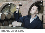 Купить «Young thoughtful winery worker holding glass of wine in cellar», фото № 28958102, снято 16 октября 2018 г. (c) Яков Филимонов / Фотобанк Лори