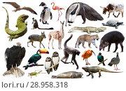 Купить «Fauna of South America isolated», фото № 28958318, снято 12 декабря 2018 г. (c) Яков Филимонов / Фотобанк Лори
