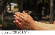 Купить «Butterfly fly away from palms», видеоролик № 28961514, снято 10 августа 2018 г. (c) Илья Шаматура / Фотобанк Лори