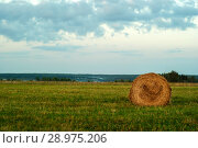 Large round bale of hay lays on a beveled meadow after rain. Стоковое фото, фотограф Евгений Харитонов / Фотобанк Лори