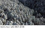 Купить «Winter landscape with pine forest in the snow at sunny frozen day», видеоролик № 28987618, снято 26 февраля 2018 г. (c) Яков Филимонов / Фотобанк Лори