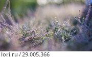 Фиолетовые цветы фоновый рисунок. Стоковое фото, фотограф Екатерина Воронкова / Фотобанк Лори