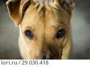 Взгляд собаки крупный план. Стоковое фото, фотограф Екатерина Воронкова / Фотобанк Лори