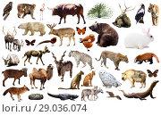 Купить «asia animals isolated», фото № 29036074, снято 18 октября 2018 г. (c) Яков Филимонов / Фотобанк Лори