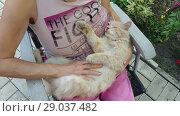 Купить «Woman stroking the cat», видеоролик № 29037482, снято 2 сентября 2018 г. (c) Илья Шаматура / Фотобанк Лори