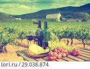 Red wine, cheese and grapes with green vineyard. Стоковое фото, фотограф Яков Филимонов / Фотобанк Лори