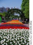 Купить «Тюльпаны в Бабушкинском парке, Москва», фото № 29039002, снято 14 мая 2018 г. (c) Natalya Sidorova / Фотобанк Лори