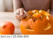 close up of woman carving halloween pumpkin. Стоковое фото, фотограф Syda Productions / Фотобанк Лори