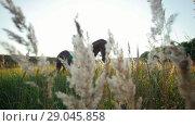 Купить «Strong man sitting on a horse in the middle of grass and plants in the summer», видеоролик № 29045858, снято 18 октября 2018 г. (c) Константин Шишкин / Фотобанк Лори