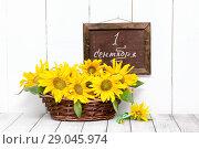 September 1. Sunflowers and a school board with the inscription. Стоковое фото, фотограф Наталья Осипова / Фотобанк Лори