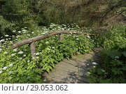 Access path to the river, Lesniczowka u Zieby, a former forest house converted to a guesthouse and restaurant, located at the gate of the Chocholowska... Стоковое фото, фотограф Christian Goupi / age Fotostock / Фотобанк Лори