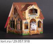 Купить «Domestic rat on the porch», фото № 29057918, снято 25 ноября 2012 г. (c) Argument / Фотобанк Лори
