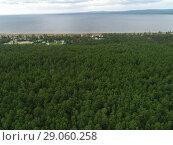 Купить «Сосновый лес около берега озера Арахлей», фото № 29060258, снято 17 августа 2018 г. (c) Геннадий Соловьев / Фотобанк Лори