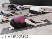 Купить «Women practicing yoga at gym», фото № 29060902, снято 29 января 2018 г. (c) Яков Филимонов / Фотобанк Лори