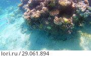 Купить «Fish-surgical Akantnuridae, Seabreams and swim around a bright colored coral reef in the Red Sea in Hurghada, Egypt, sunlight, waves, under water», фото № 29061894, снято 17 мая 2016 г. (c) Tetiana Chugunova / Фотобанк Лори