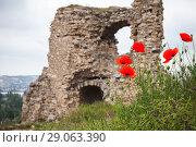Купить «Poppies near ruins of ancient fortress», фото № 29063390, снято 7 мая 2018 г. (c) EugeneSergeev / Фотобанк Лори
