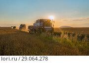 Купить «Комбайны переезжаю на ночную уборку. Уборка урожая. Комбайн убирает пшеницу. Поспела пшеница. Поле пшеницы, зерно.», фото № 29064278, снято 9 июля 2018 г. (c) Лашков Фёдор / Фотобанк Лори