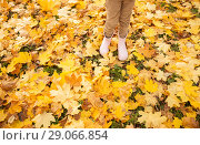 Купить «kid legs in rubber boots on maple leaves in autumn», фото № 29066854, снято 19 октября 2017 г. (c) Syda Productions / Фотобанк Лори