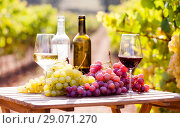 Купить «still life with glasses of red and white wine and grapes in field of vineyard», фото № 29071270, снято 19 октября 2018 г. (c) Татьяна Яцевич / Фотобанк Лори