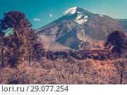 Купить «View of Lanin Volcano in National Park of Argentina», фото № 29077254, снято 6 февраля 2017 г. (c) Яков Филимонов / Фотобанк Лори