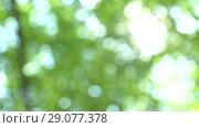 Купить «Swaying in the wind defocused bright summer sunny green background with bokeh and glares. Summer warm afternoon in canopy of trees», видеоролик № 29077378, снято 23 февраля 2019 г. (c) Dmitry Domashenko / Фотобанк Лори