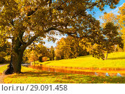 Купить «Autumn landscape of October park nature. Yellowed deciduous autumn tree at the bank of the river in sunny day», фото № 29091458, снято 21 сентября 2017 г. (c) Зезелина Марина / Фотобанк Лори