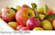 Купить «ripe apples in wooden box on table», видеоролик № 29092894, снято 7 сентября 2018 г. (c) Syda Productions / Фотобанк Лори