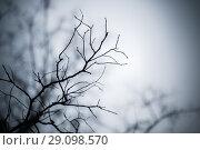 Купить «Bare tree branches background», фото № 29098570, снято 15 сентября 2017 г. (c) EugeneSergeev / Фотобанк Лори