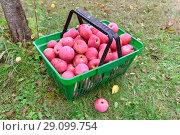Купить «Красные яблоки в зеленой пластиковой корзине», эксклюзивное фото № 29099754, снято 3 сентября 2018 г. (c) Юрий Морозов / Фотобанк Лори