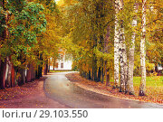Купить «Autumn landscape. Autumn trees and fallen autumn leaves on the wet footpath in park alley after rain», фото № 29103550, снято 6 октября 2017 г. (c) Зезелина Марина / Фотобанк Лори