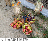 Купить «Baskets with apples, pears and grapes. Baskets with fruit», фото № 29116970, снято 14 сентября 2018 г. (c) Леонид Еремейчук / Фотобанк Лори