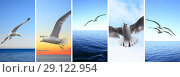 Купить «Flying birds over sea», фото № 29122954, снято 13 декабря 2018 г. (c) Роман Сигаев / Фотобанк Лори